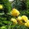 Virágok közt 454