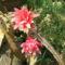 Virágok közt 474