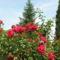 Virágok közt 497