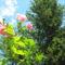 Virágok közt 507