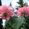 Virágok közt 524