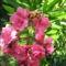 Virágok közt 530