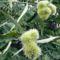 2009-09-12 őszi termések 009