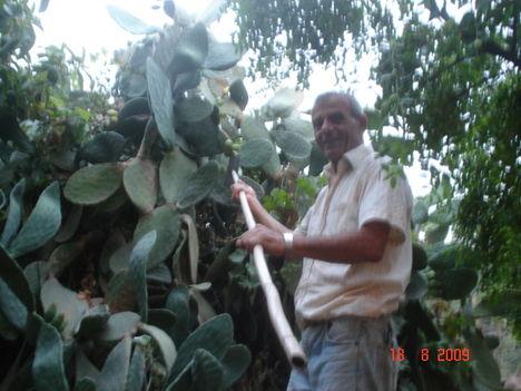 kaktusz szedés