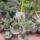 Kaktuszaim-001_371214_72524_t