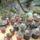 Kaktuszaim_371215_26838_t