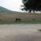 látogatók a szomszéd lovardából