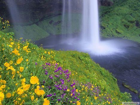 Vadvirágok_a_Seljalandsfos-vízesés_mellett-Izland
