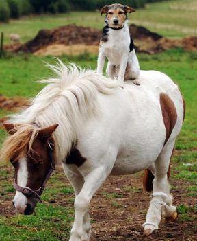 kutya és póni