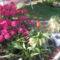 Rhododendron májusi virágzása (5 éve mindig tömve-telt virágokkal) idén 76 virággal