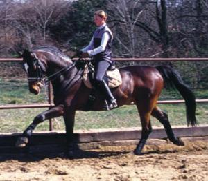hasznos állatok  a lovak ez a ló igen kesces járású