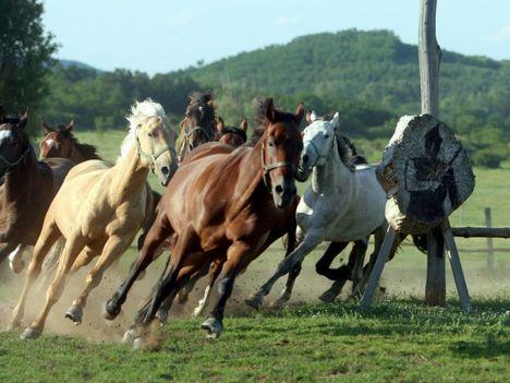 hasznos állatok .futóversenyeznek a lovak