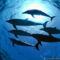 tengerben-uszo-delfin-csapat-kep