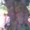 Énlaka - a 700 éves fa alatt 2009
