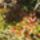 Őszi képek Csongrád
