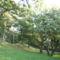 Kacskaringós utak  és fák