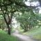Kacskaringós utak, kacskaringós fák