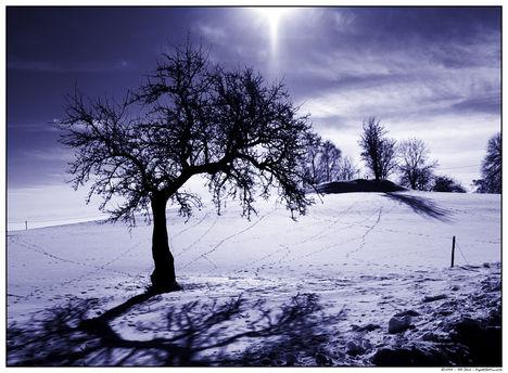 Téli táj 8