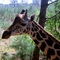 Kenyai vadaspark