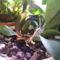 Legelső orchideám kisfiával