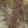 Nyárutó, őszelő