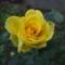 A világos sárga