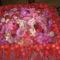 Virágkiállitás2009.09.21-22.