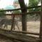 Állatkerti séta 19