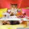 teázó cica
