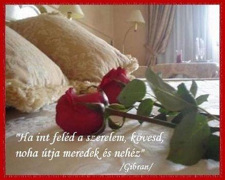 Ha int a szerelem, kövesd