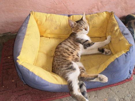 Micó cica sziesztázik