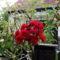 Az én, virágaim!--Hajni 9