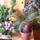 Cycas pálma a szobanövényeim egyrésze között