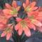 Klívia virága ;)