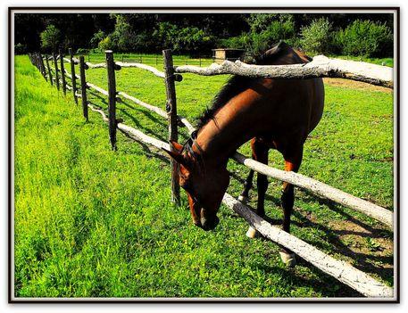Természetfotók,  barna ló