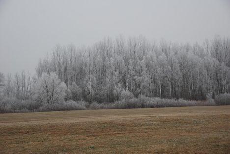 Fagyott fák