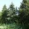 2009  09 26  Szarvason Pepi kertjében 041