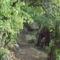 az őrdőgbánya ősvény