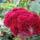 Marta_sopronhorpacs_395385_18363_t