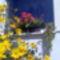 Virágoskert 5
