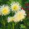 Növények,szeretete..... 5