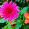 Növények,szeretete..... 6