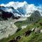 Yakok a Kangshung-gleccsernél, Tibet