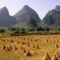 Learatott rizsföld, Li-folyó, Yangshuo, Guangxi tartomány