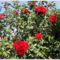 Balaton és virágaim. 14