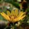 kertem, mezők virágai 4
