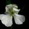 kertem, mezők virágai 7