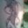 Sello_309564_78621_t