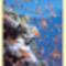 Vörös- tenger élővilága