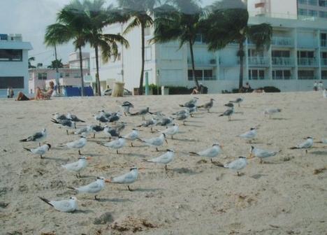 Floridai tengerpart